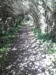 Être en chemin : parcours jalonné de belles références
